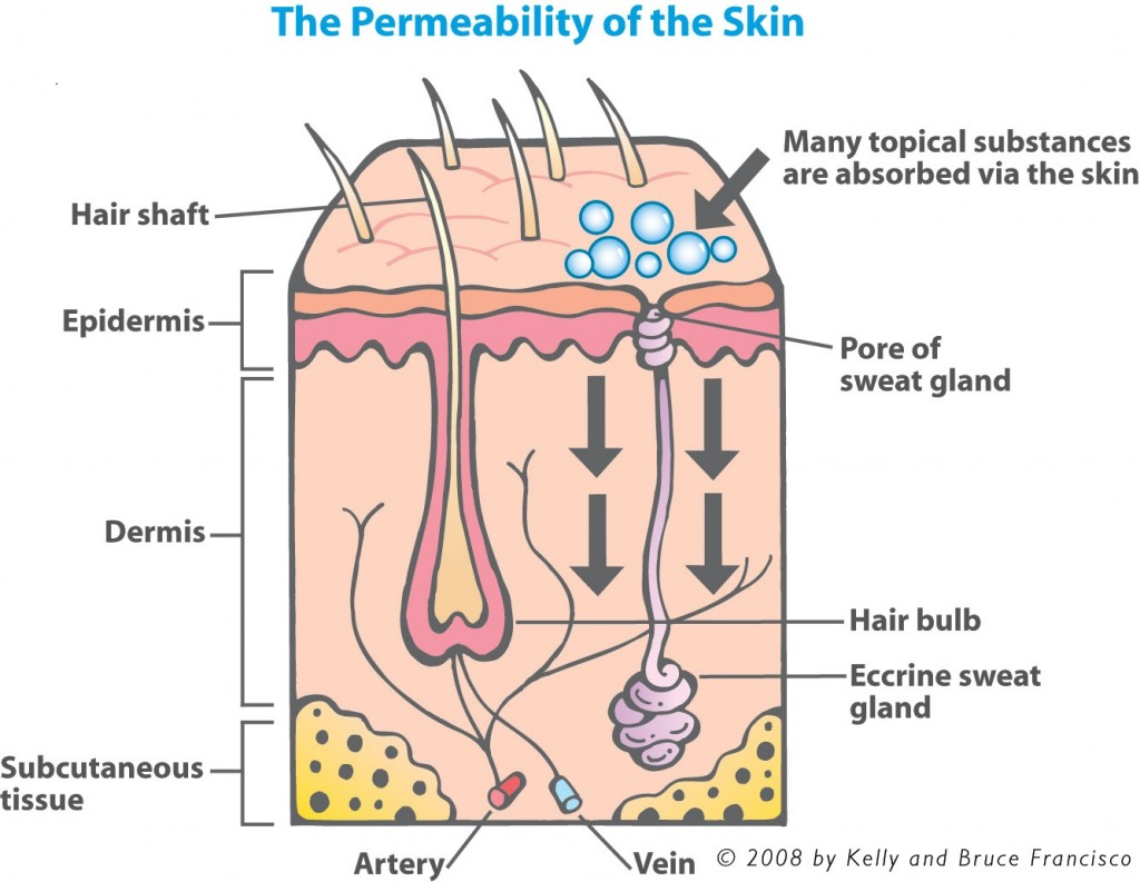 The Permeability of the Skin